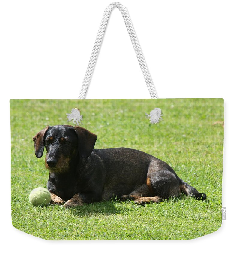 Dog Weekender Tote Bag featuring the photograph Dachshund Wants To Play by Christiane Schulze Art And Photography