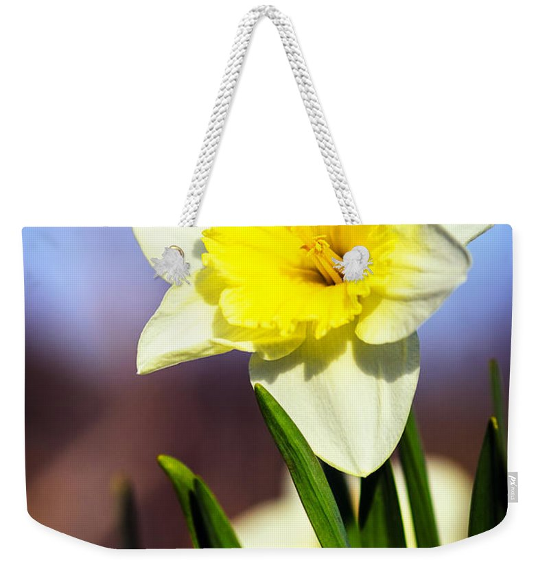 Nature Weekender Tote Bag featuring the photograph Daffodil Blossom by Sennie Pierson