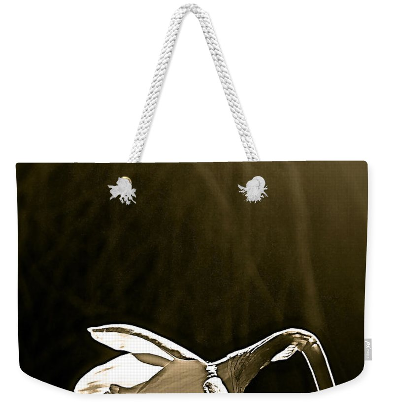 Flower Weekender Tote Bag featuring the photograph Daffodils 2 by Pamela Cooper