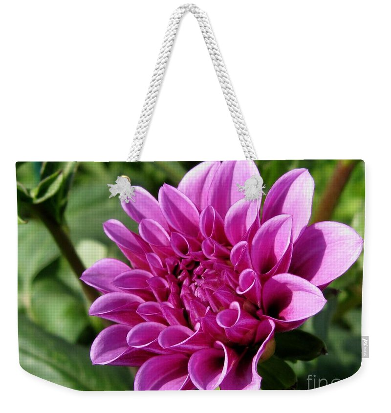 Dahlia Weekender Tote Bag featuring the photograph Dahlia Named Blue Bell by J McCombie