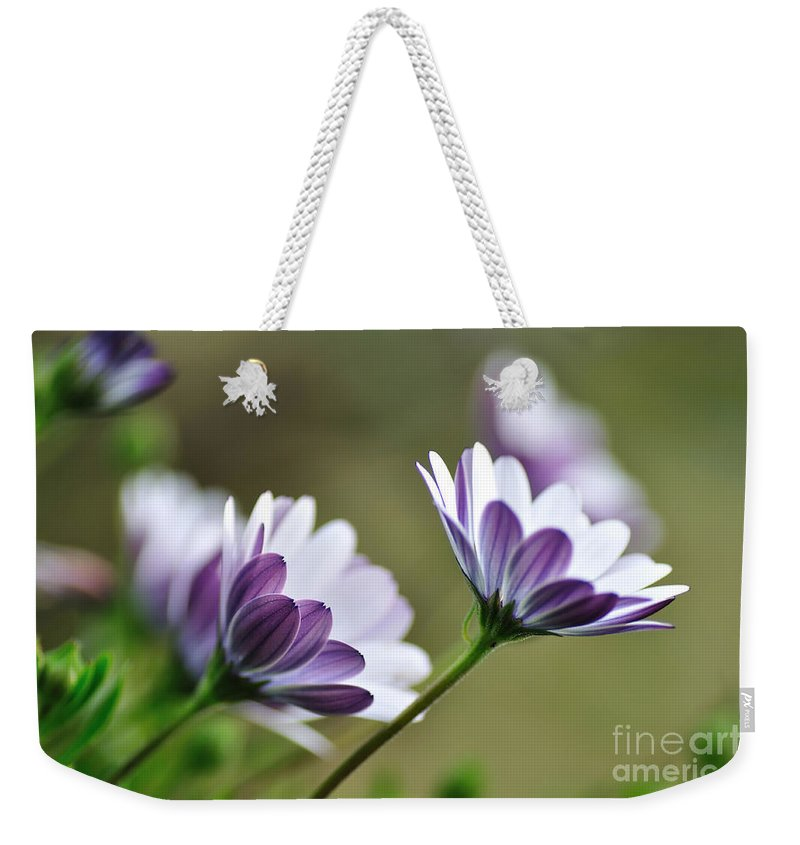 Photography Weekender Tote Bag featuring the photograph Daisies Seeking The Sunlight by Kaye Menner