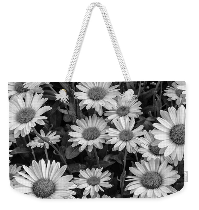 Daisy Weekender Tote Bag featuring the photograph Daisy Cluster Vermont Flowers In Black And White by Andy Gimino