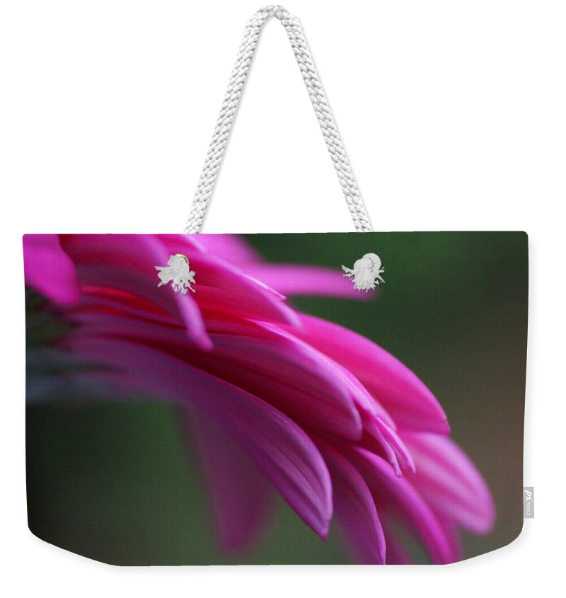 Pink Weekender Tote Bag featuring the photograph Daisy Petals by Carol Lynch