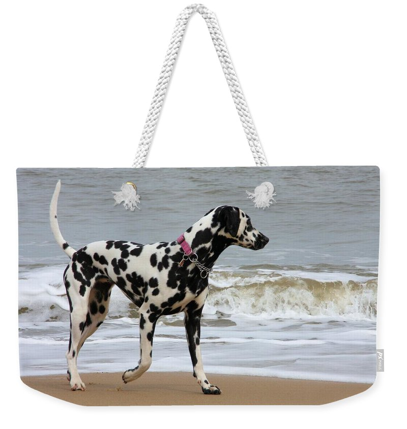 Dalmatian By The Sea Weekender Tote Bag featuring the photograph Dalmatian By The Sea by Gordon Auld