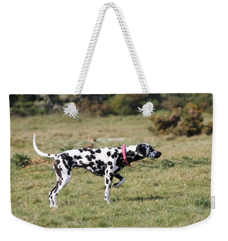 Dalmatian Pretending To Be A Pointer Weekender Tote Bag featuring the photograph Dalmation Pretending To Be A Pointer by Gordon Auld