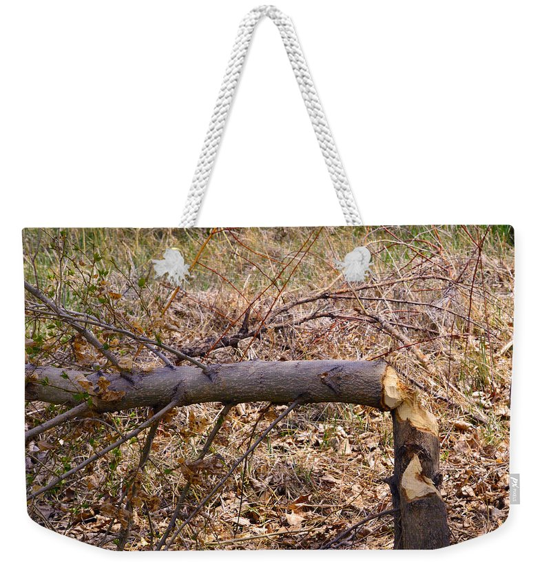 Tree Weekender Tote Bag featuring the photograph Dam Beavers Again by Brent Dolliver