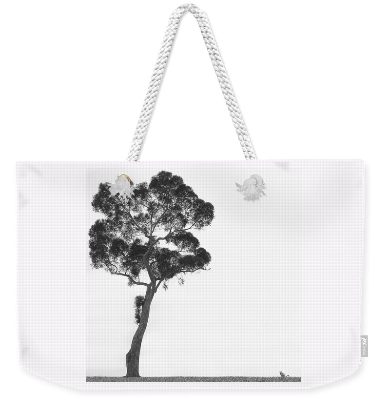 Bird And Cat Weekender Tote Bag featuring the photograph Damn Missed Again by Mike McGlothlen