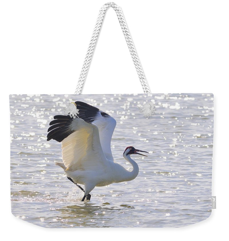 Whooping Crane Weekender Tote Bag featuring the photograph Dancing For My Lady by Tony Beck