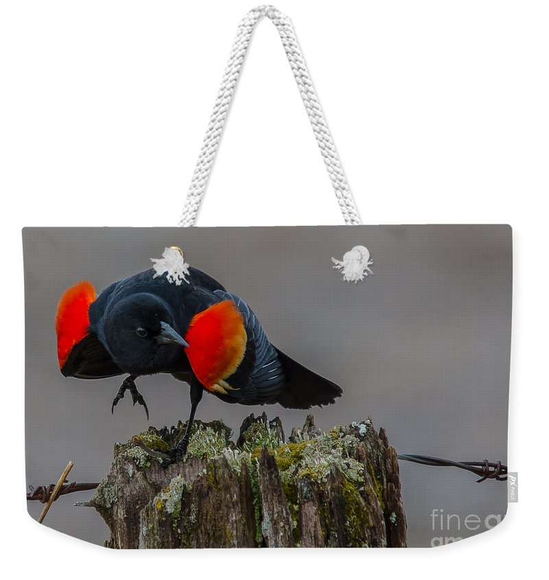 Landscape Weekender Tote Bag featuring the photograph Dancing For The Ladies by Cheryl Baxter