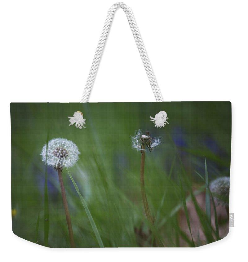 Dandelion Weekender Tote Bag featuring the photograph Dandelion by Belinda Greb