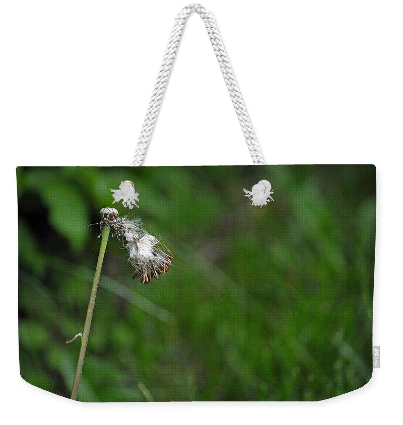 Dandelion In The Wind Weekender Tote Bag featuring the photograph Dandelion In The Wind by Lisa Phillips