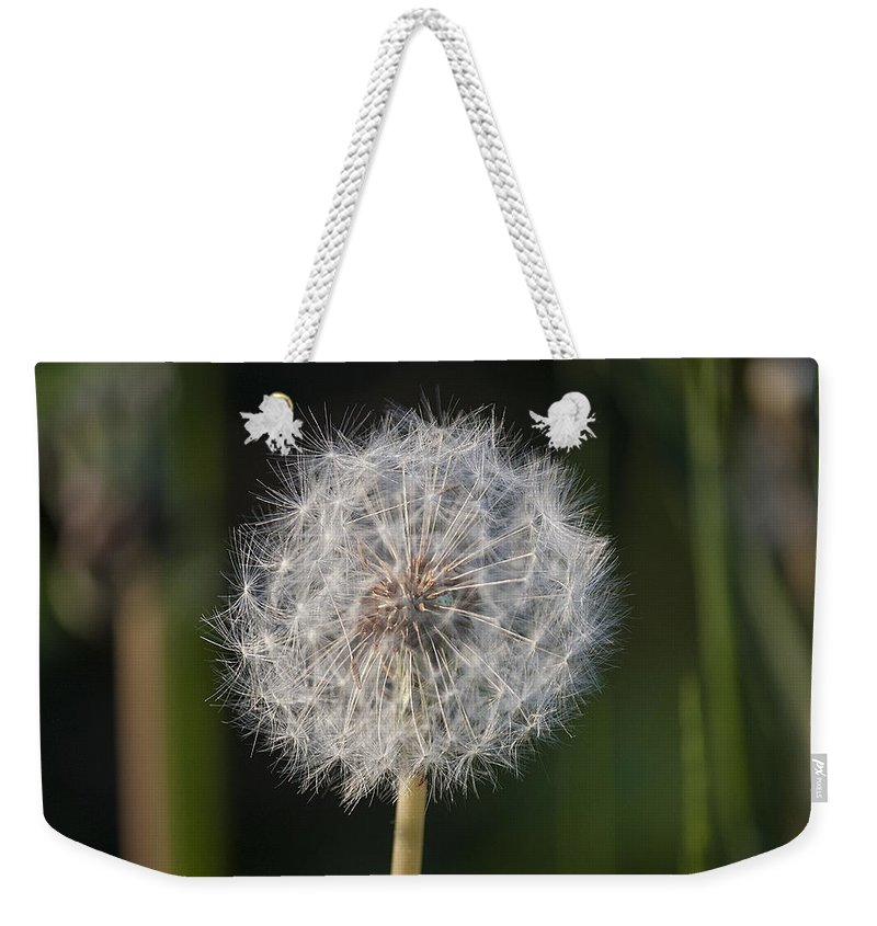 Dandelion Weekender Tote Bag featuring the photograph Dandelion With Abstract Grasses by Richard Thomas
