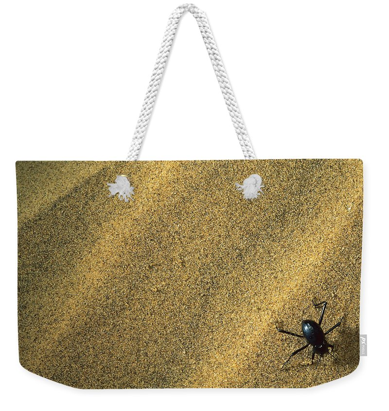 Feb0514 Weekender Tote Bag featuring the photograph Darkling Beetle Collecting Dew by Mark Moffett