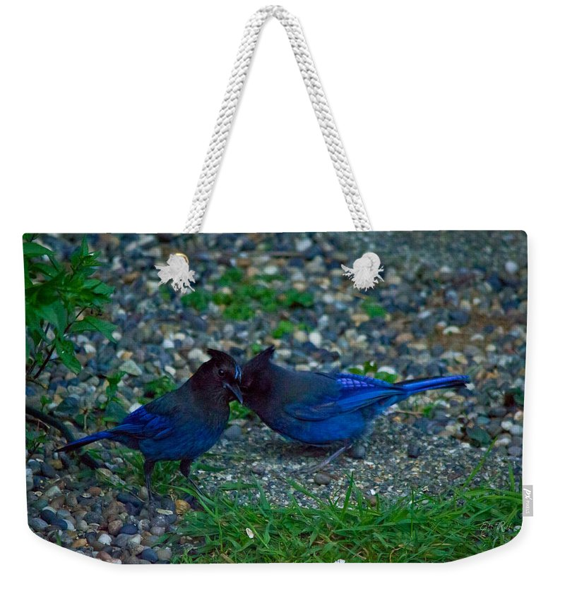 Stellar Jey Weekender Tote Bag featuring the photograph Darling I Have To Tell You A Secret-sweet Stellar Jay Couple by Eti Reid