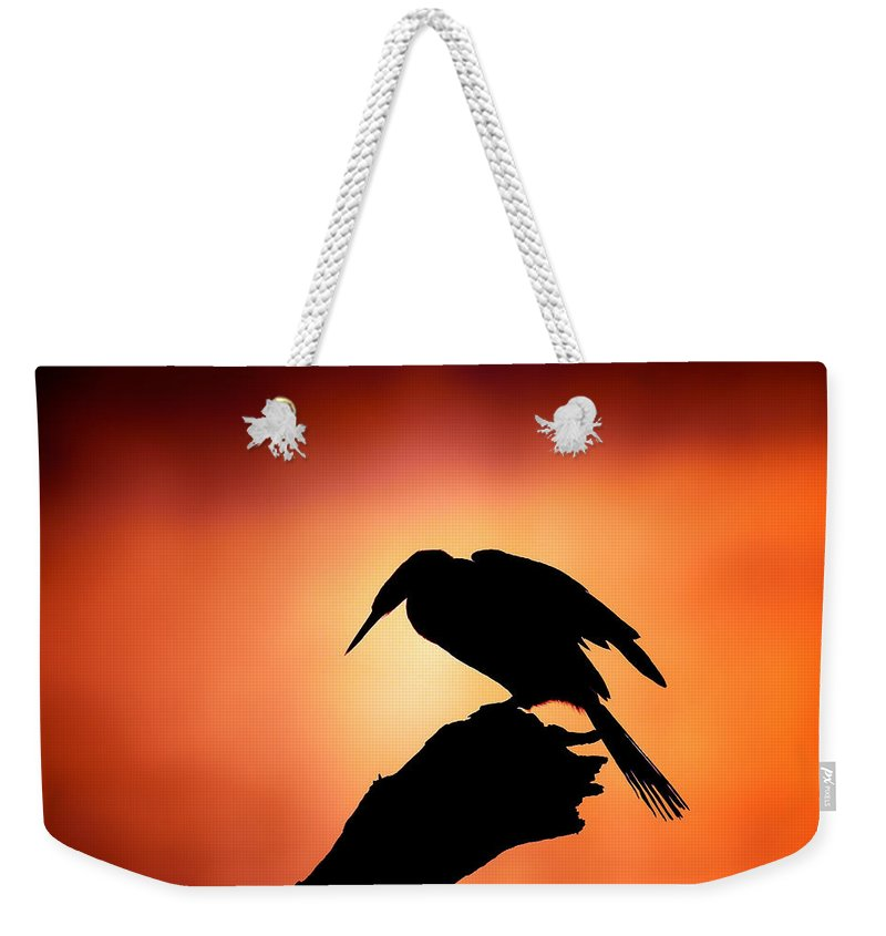 Darter Weekender Tote Bag featuring the photograph Darter Silhouette With Misty Sunrise by Johan Swanepoel
