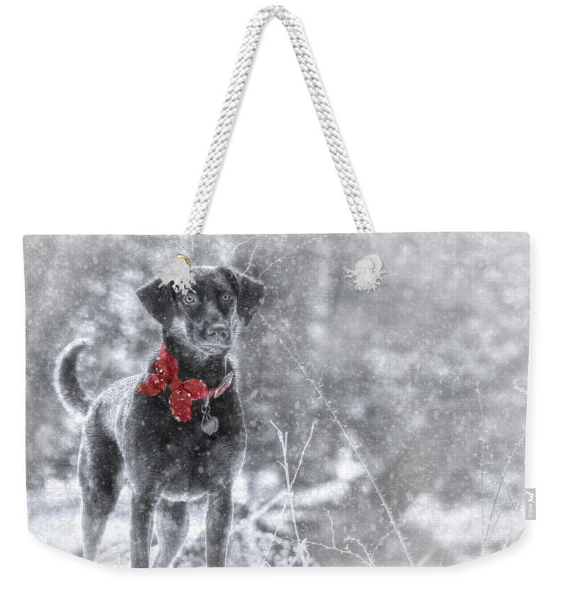 Dog Weekender Tote Bag featuring the photograph Dashing Through The Snow by Lori Deiter