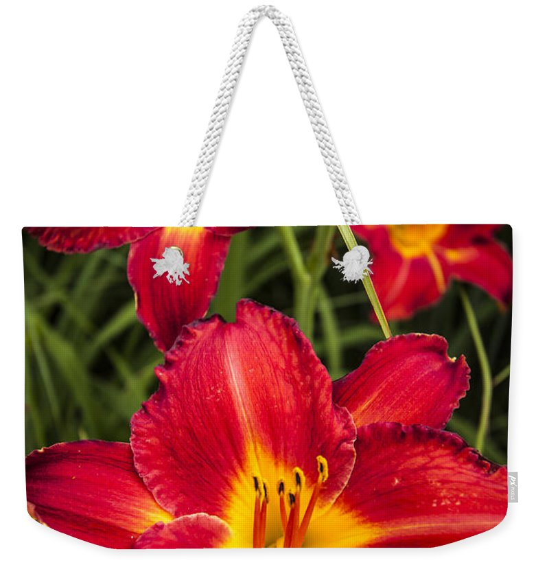 3scape Photos Weekender Tote Bag featuring the photograph Day Lilies by Adam Romanowicz