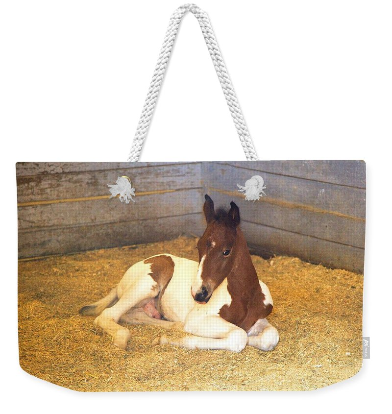 5398 Weekender Tote Bag featuring the photograph Day Old Colt by Gordon Elwell