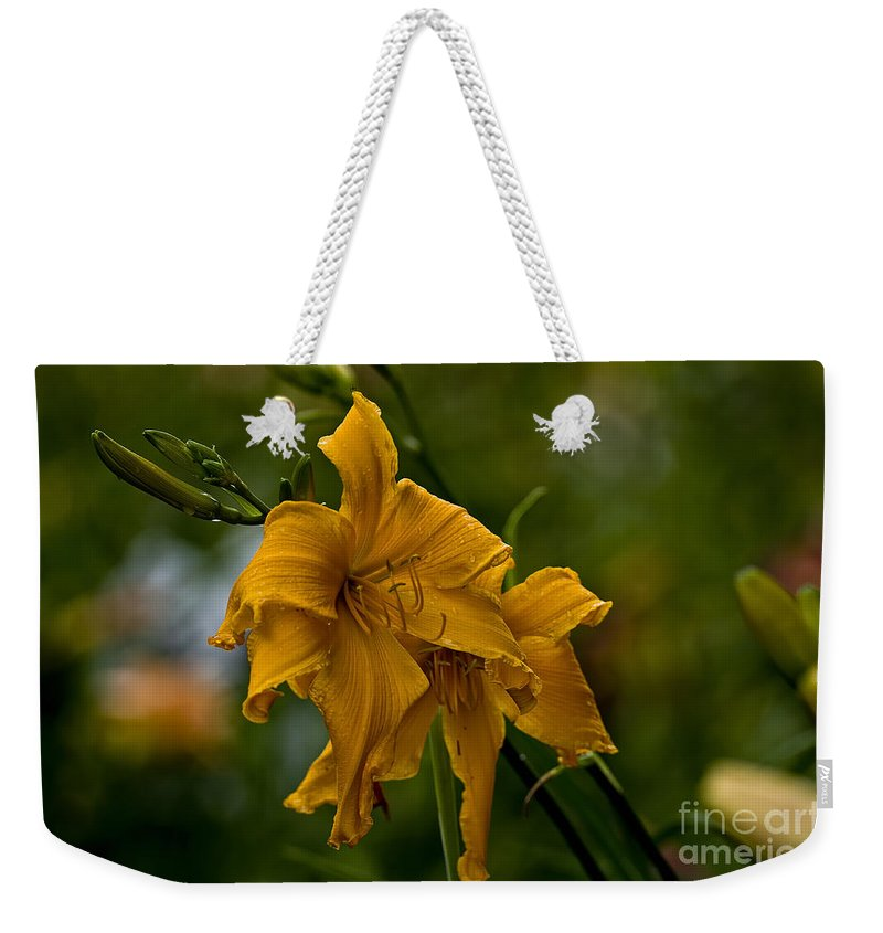 Daylily Weekender Tote Bag featuring the photograph Daylily Picture 474 by World Wildlife Photography