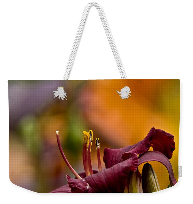 Daylily Weekender Tote Bag featuring the photograph Daylily Pictures 571 by World Wildlife Photography