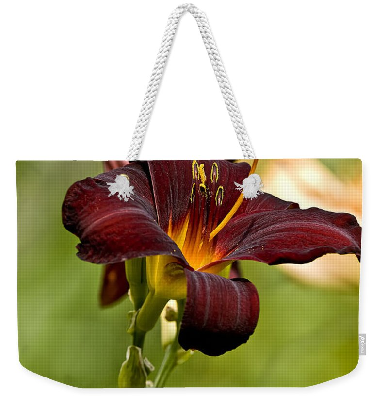 Daylily Weekender Tote Bag featuring the photograph Daylily Pictures 576 by World Wildlife Photography