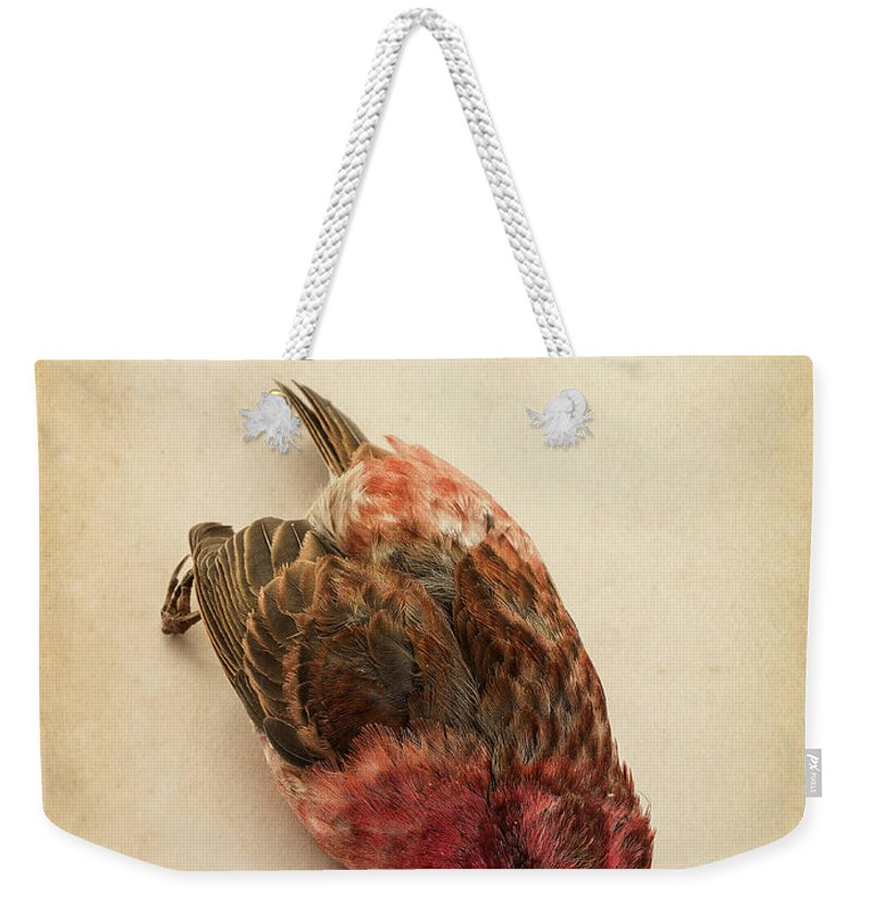 Bird Weekender Tote Bag featuring the photograph Death Of The Innocent by Edward Fielding