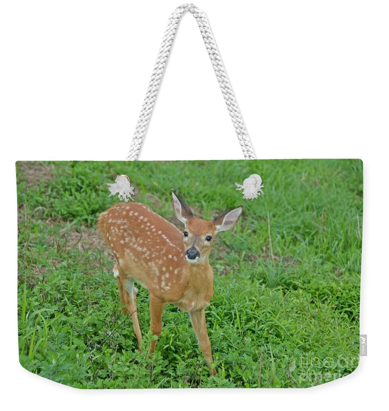 Deer Weekender Tote Bag featuring the photograph Deer 11 by Cassie Marie Photography