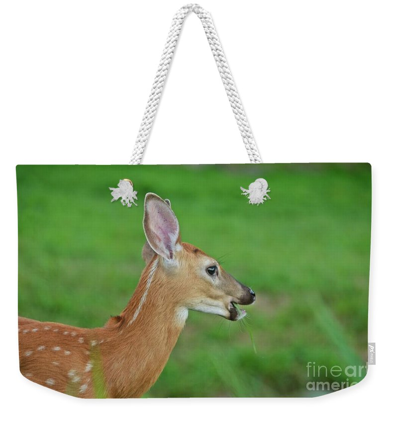 Deer Weekender Tote Bag featuring the photograph Deer 15 by Cassie Marie Photography