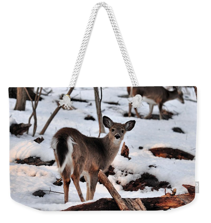 Deer Weekender Tote Bag featuring the photograph Deer And Snow by Russ Considine