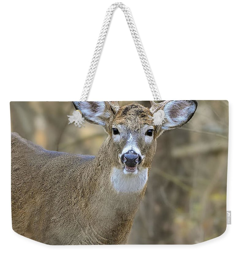 White-tailed Deer Weekender Tote Bag featuring the photograph Deer Pictures 445 by World Wildlife Photography
