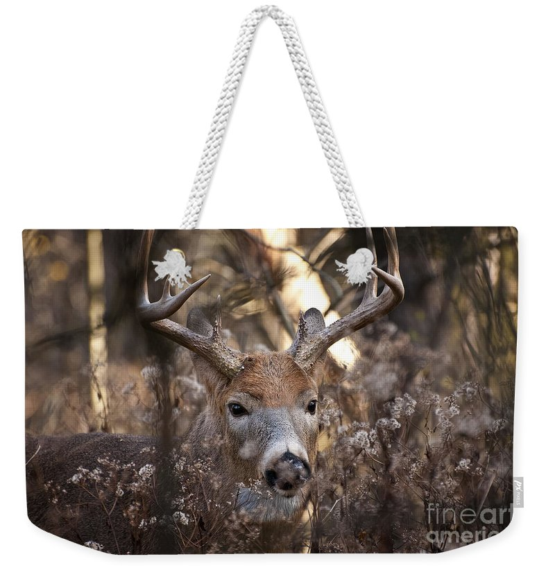 White-tailed Deer Weekender Tote Bag featuring the photograph Deer Pictures 449 by World Wildlife Photography