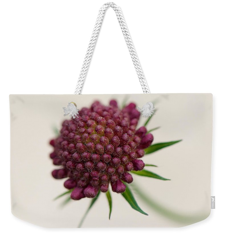 Interior Design Weekender Tote Bag featuring the photograph Demure by Lisa Knechtel