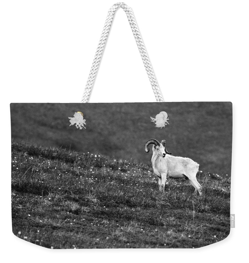 Denali's Majestic Wildlife Weekender Tote Bag featuring the photograph Denali's Majestic Wildlife by Wes and Dotty Weber