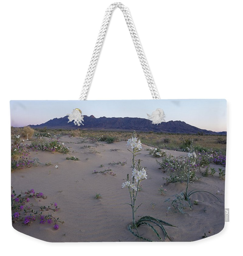 California Weekender Tote Bag featuring the photograph Desert Lily Sancturay by Susan Rovira