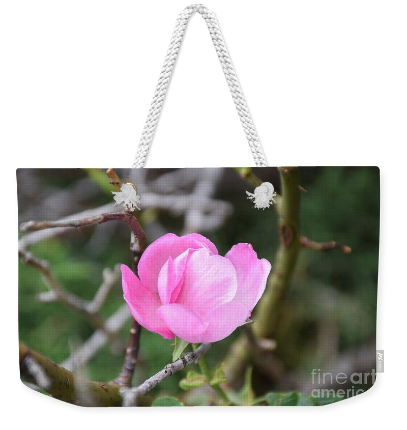 Desert Roses Weekender Tote Bag featuring the photograph Desert Rose II by Shar Schermer