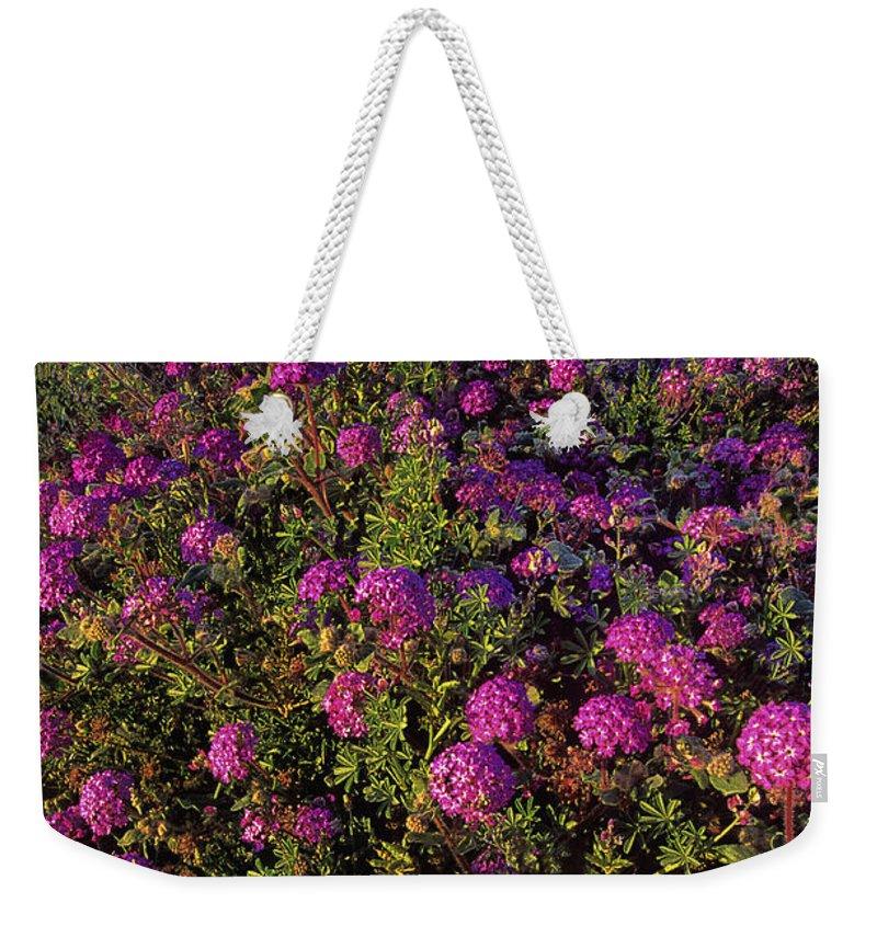 Desert Sand Verbena Weekender Tote Bag featuring the photograph Desert Sand Verbena Wildflowers by Dave Welling