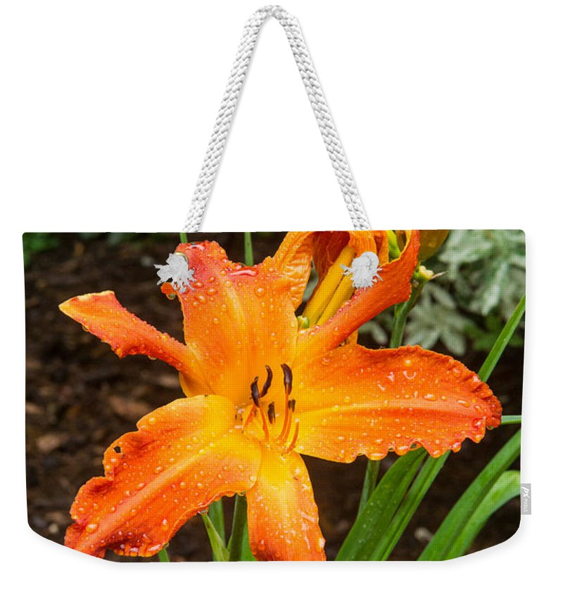 Lily Weekender Tote Bag featuring the photograph Dew Drops On Golden Lily by Douglas Barnett