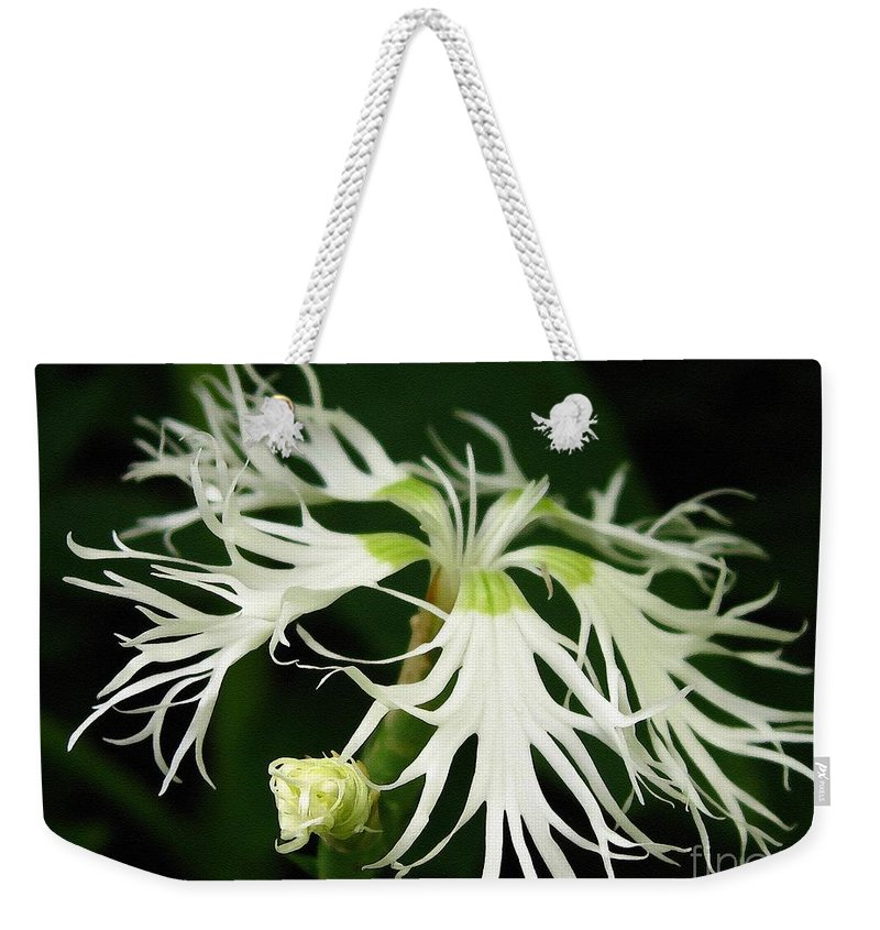Dianthus Superbus Weekender Tote Bag featuring the painting Dianthus Superbus - White by J McCombie
