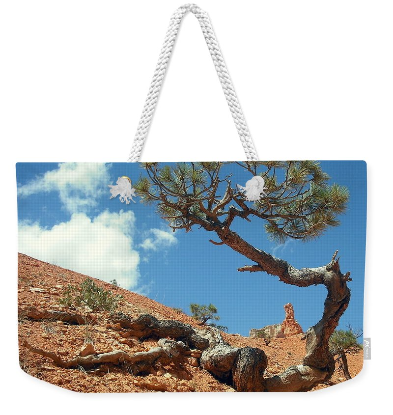 Joshua Tree Weekender Tote Bag featuring the photograph Digging In by J Allen
