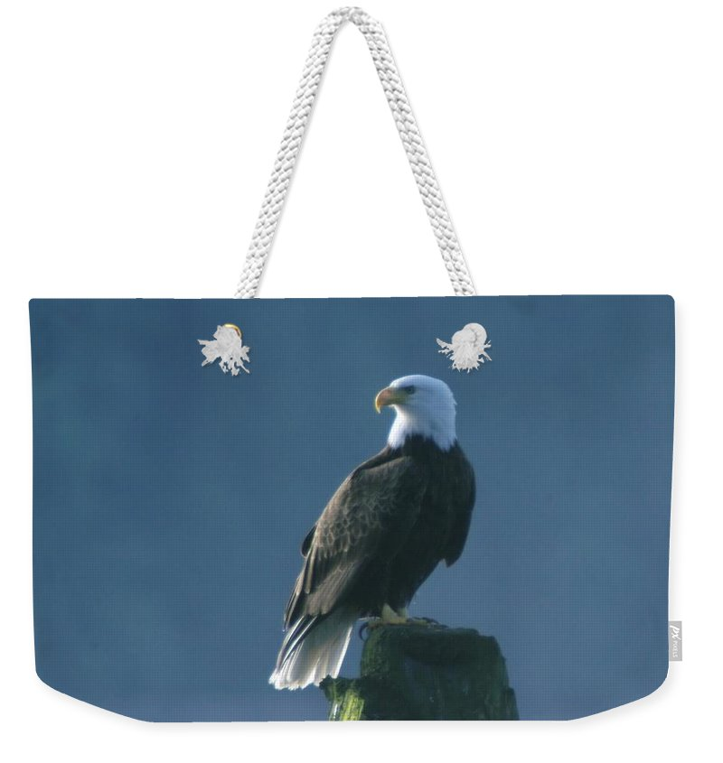Eagles Weekender Tote Bag featuring the photograph Dignity by Jeff Swan