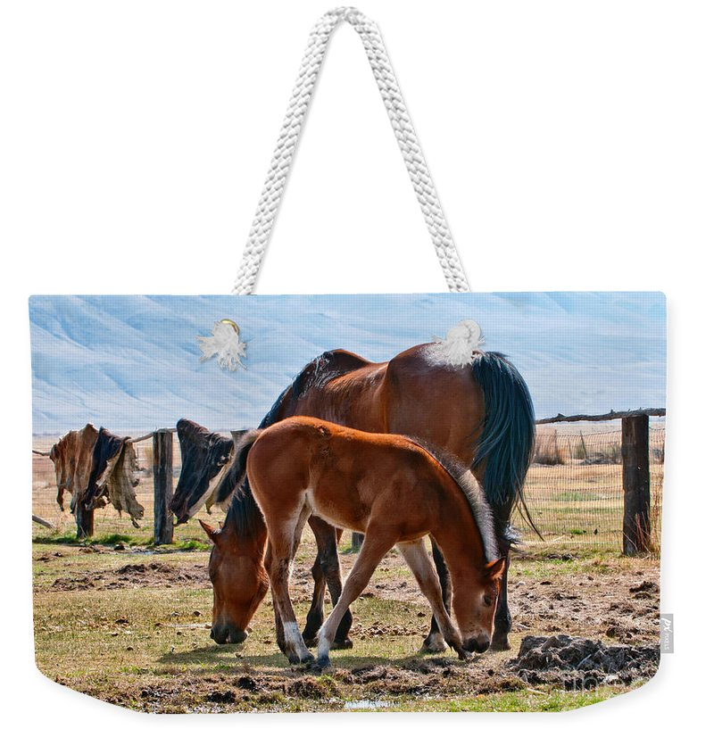 Horses Weekender Tote Bag featuring the photograph Dine With Me by Larry Young