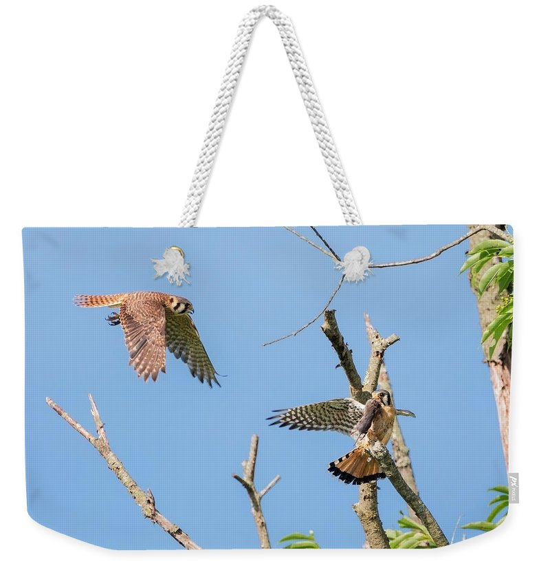 Kestrel Weekender Tote Bag featuring the photograph Dinner Time For The Kestrels by Bill Wakeley