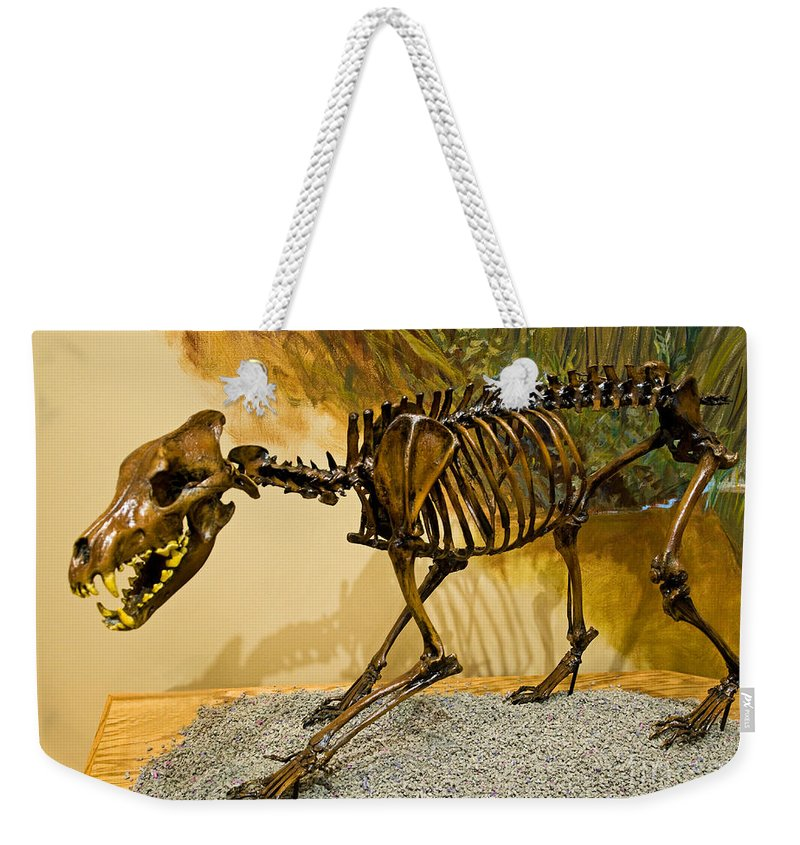 Dire Wolf Weekender Tote Bag featuring the photograph Dire Wolf Fossil by Millard H. Sharp