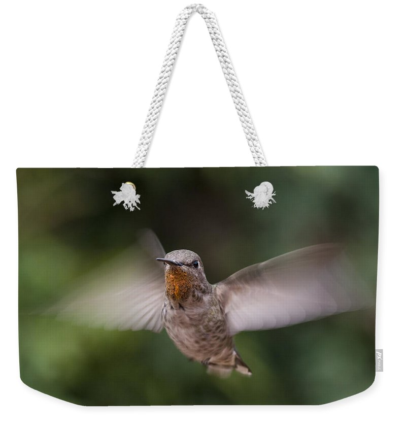Annas Hummingbird Weekender Tote Bag featuring the photograph Dirty Chin by Mike Herdering