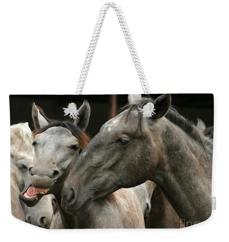 Horse Weekender Tote Bag featuring the photograph Do I Have A Nice Smile by Angel Ciesniarska