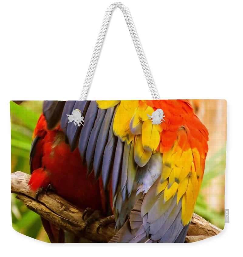 Ara Weekender Tote Bag featuring the photograph Do Not Disturb by Zina Stromberg