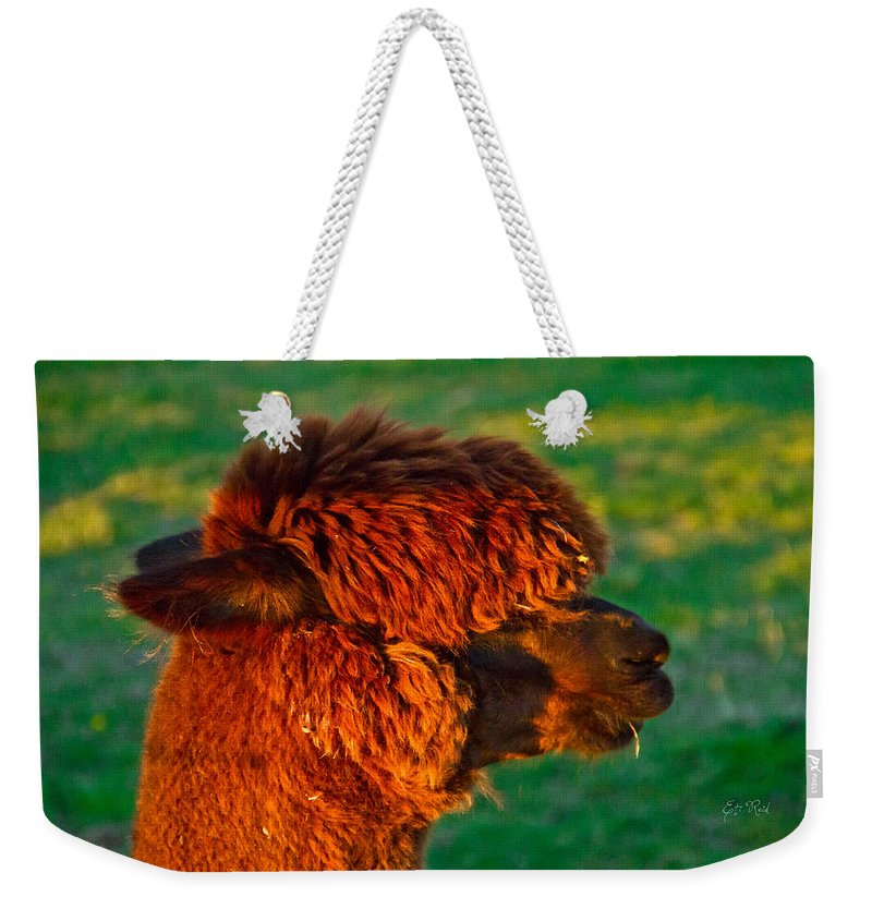 Adorable Weekender Tote Bag featuring the photograph Do You Like My New Haircut Alpaca by Eti Reid