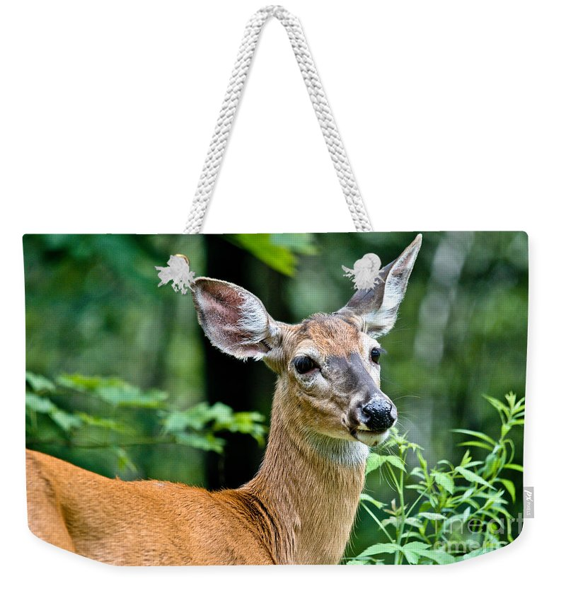 Deer Weekender Tote Bag featuring the photograph Doe Close by Cheryl Baxter