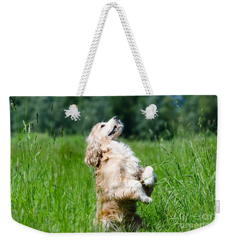 Dog Weekender Tote Bag featuring the photograph Dog Sitting Up by Mats Silvan
