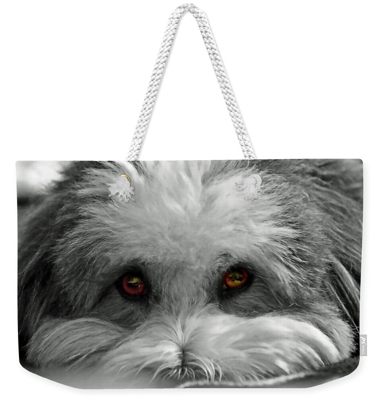 Dog Weekender Tote Bag featuring the photograph Coton Eyes by Keith Armstrong